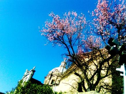 Roma in fiore, Rossella Pompeo