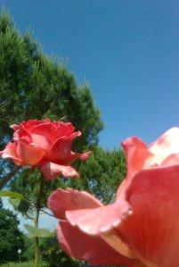 Foto4197 - Copia
