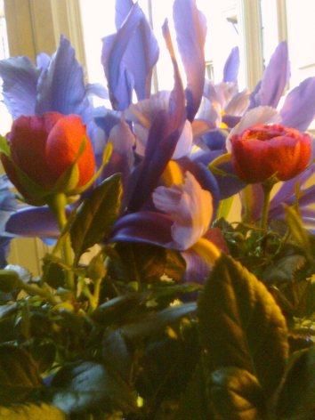 les-fleurs-donnent-toujours-raison-au-coeurp