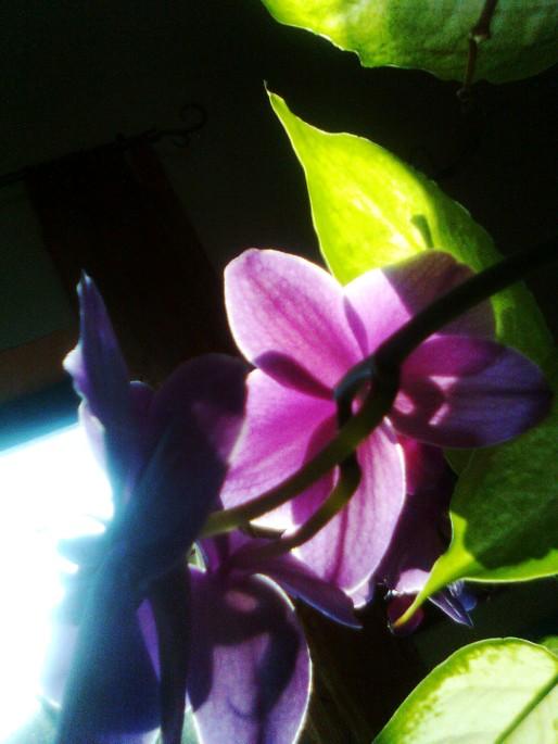 Foto5824 - Copia