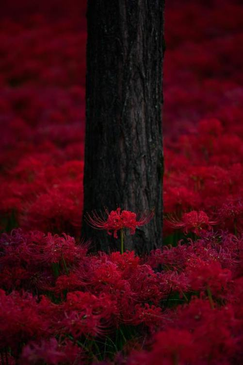 fire river (by Miya Sho)